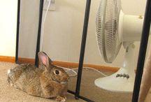 Rabbits Rule! / Lots of beautiful bunnies here!