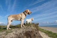 New Dog Friendly Holiday Properties / New dog friendly holiday properties on our site