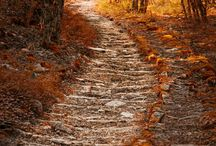 The most beautiful paths / Nature, path, perfect