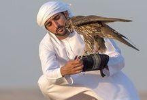 Hamdan MRM: con halcones 1 / Hamdan bin Mohammed bin Rashid Al Maktoum (Fazza'a) 14/11/1982 . Nombrado príncipe heredero de Dubái el 01/02/2008.   - Padre: Mohammed bin Rashid bin Saeed Al Maktoum.  - Madre: Hind bint Maktoum bin Juma Al Maktoum.
