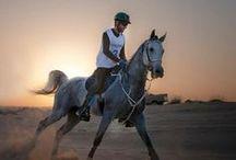 Hamdan MRM: endurance 1 / Hamdan bin Mohammed bin Rashid Al Maktoum