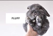 Fluff / Lovely fluffs of the internet