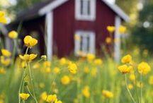 Trädgård / Inspiration till trädgården vid torpet