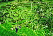 Bali | Travel Photography