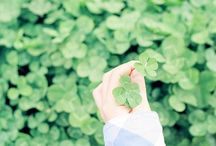 CLOVER ♧ 幸せの四つ葉 / ♣ four leaf clover ♣ ♧♧ GOOD LUCK ♧♧