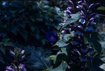 Fine Art Photography / Fine Art Photography by Midsummer Night Media, based out of Denton, TX