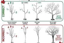 Gardening / Pruning Fruit Trees