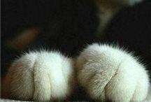 CATS / meowwww !