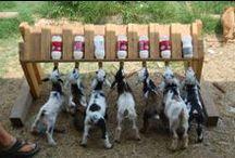 Implementos Cabras & Ovelhas / Bebedouros, comedouro, cochos, Play ground's, cercas e apriscos