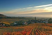 Route des Vins d'Alsace / Découvrez la beauté de la célèbre Route des Vins d'Alsace, un itinéraire mythique !