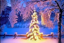 Winter Wonderland / by Mel