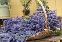 Laventeli I ❤️ / Puutarha Laventeli Provence