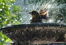 Bird Bath / Bird bath with birds in it, pretty.
