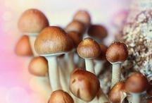 Shroomin' fungus