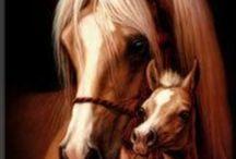 Horse art / by Danielle Gorham