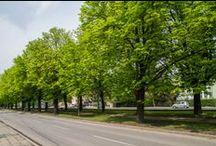 Wiosna na Sołaczu :)