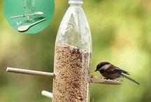 vogels / by jenny van losser