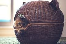 Furniture for Cats / Some of the coolest furniture ideas for cats from around Pinterest and the web!