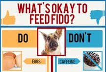 Dog Health Tips / Dog health tips or infographics (for example what to feed your dog, exercise tips, grooming tips, etc)