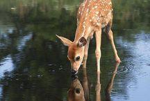 Deer / by VM