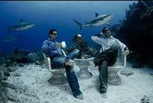 Life Underwater / Some of Creative Director Lia Barrett's favorite underwater moments.
