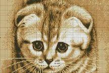 Draw me a Cat
