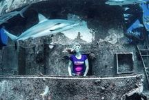 On Location: Stuart Cove's, Bahamas / Prawno Apparel went to Stuart Cove's Dive Bahamas for an epic photo shoot featuring sharks, wrecks and freediver/ocean activist Liz Parkinson. Look for tee and hoodie designs inspired by images from the shoot on www.prawnoapparel.com.