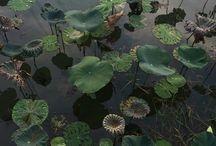 Plants, Nature & Landscapes
