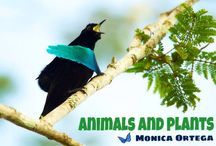 Animal and plants / Animals and plants of the world  / by Monica Ortega