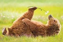 Beestachtig mooi, beauty & beast / animals, dieren / by Inge Wolters