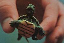 turtle / żółw