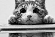 Cats - Vol. 2