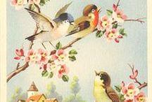 Birdy illustration...