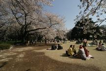 Destinos Especiais: Japan