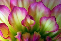 Colour fantastic