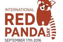 International Red Panda Day / International Red Panda Day is the 3rd Saturday of September each year. On this day, zoos, schools, and other groups around the world celebrate by creating as many red panda rangers as possible in one day! Download our free Activity Kit from RedPandaNetwork.org and join the fun!