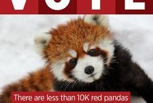 Thanks for Rocking the Red Panda Vote! / In March 2015, you voted for Red Panda Network in the European Outdoor Conservation Association online competition and guess what? We won! What that means is, RPN gained 30K in funding thanks to your vote! Stay tuned for new infographic images that will explain why your vote matters and what RPN will do with the newly won funding!