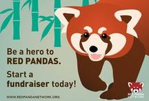 Expos & Events / Red Panda Network exhibits at various events throughout the year. Come See Us!