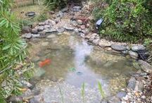 Pond / Water garden Cleaning / Before and after pond / water garden cleanings.  Nature Coast Aquascape in Tampa Bay Area and Floral City, Florida (FL)  (727) 258-4114 Tampa Bay ~ (352) 637-9004 Floral City