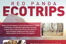 EcoTrippin' / Traveling through Red Panda Territory in Nepal