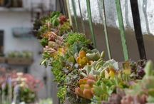 Wall Inspirations / Wreaths, Vertical Succulents, Decor, Crafts
