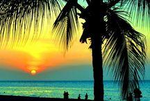 . Palmtree . /  Palmtrees make me happy