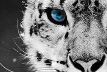 Animals :) / by Lauryn Barnes