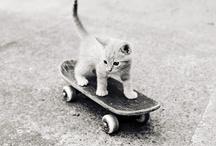 Longboard / longboarding and surfing pins