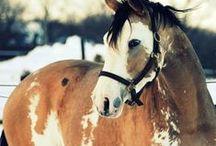 Horses ♥ / by Lauryn Barnes