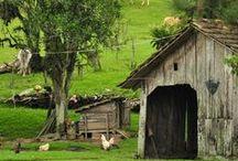 So God Made a Farmer ♥ / by Lauryn Barnes