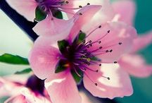 Flowers ✿ / by Lauryn Barnes