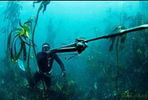 freediving - spearfishing / by Ale Bonora