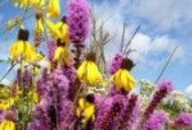 Wildflower Farm's Blog / Growing, Gardening and Floral Design with Wildflowers, Pollinators and People