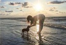 Pet Friendly Beach Vacations / Hilton Head Island is fun for the whole family - including your pets! http://www.hiltonheadisland.org/about-the-island/pet-friendly/